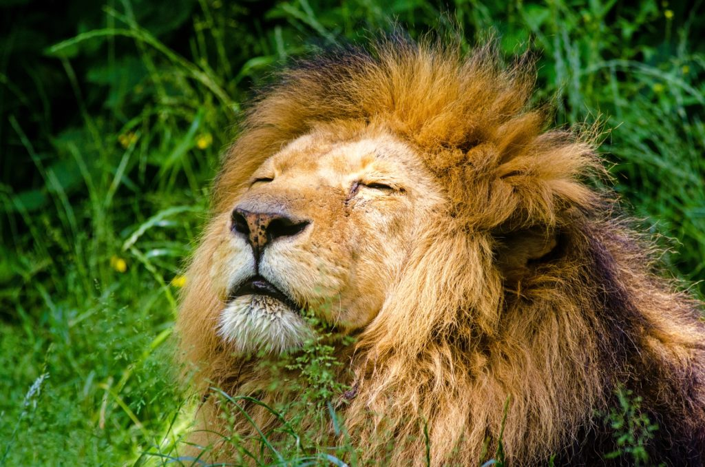 Spiritual Inspirations from Lions (World Lion Day) image