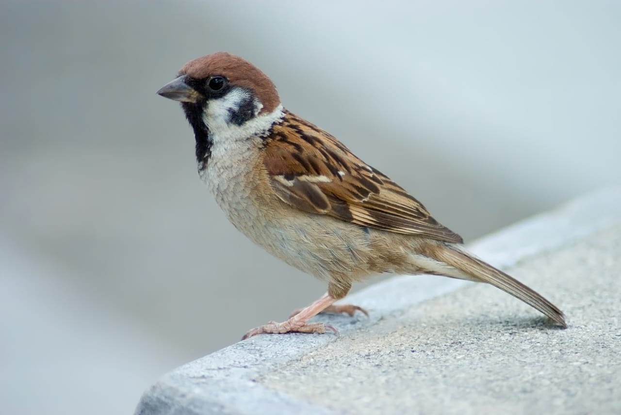Spiritual Inspirations from Birds | Happy World Sparrow Day | The Significance of World Sparrow Day image